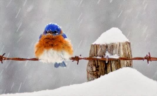 coldbird