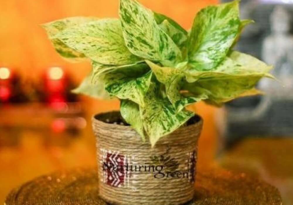 nurturing green-ecommerce-indoor plants