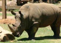 entrepreneurs-thick skin-rhino