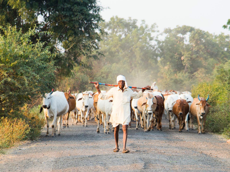 PM Modi Launches Animal Husbandry Startup Grand Challenge
