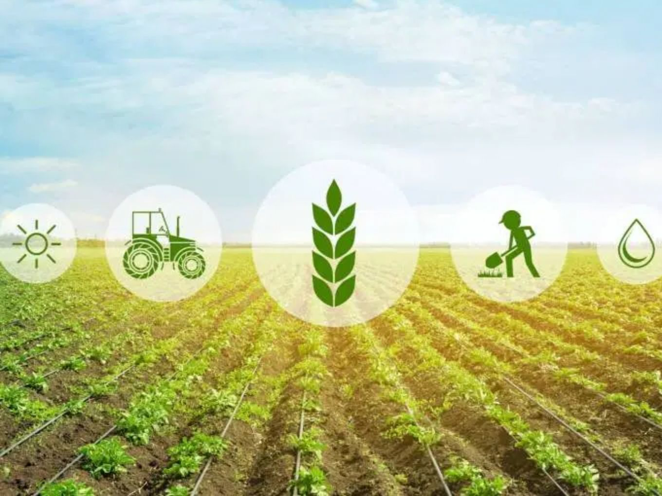 Agritech Startup Nu Genes Raises $6 Mn To Take Seed Business Global